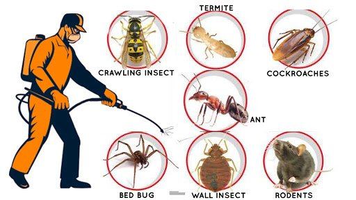 Doorstep pest control services in Dum Dum Road